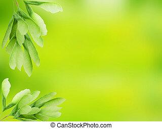verde sai, sobre, abstratos, fundo borrado