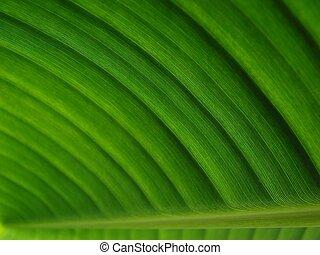 verde scuro, foglia palma, banana