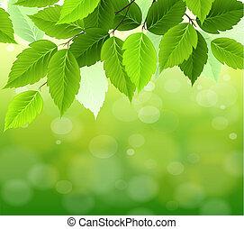 verde, selectivo, natural, foco, plano de fondo