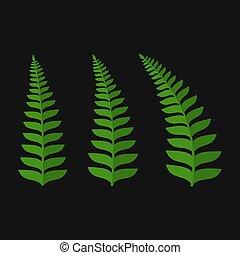 verde, set, foglia, felce