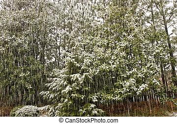 verde, snowstorm