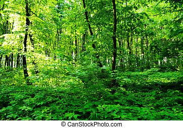 verde, soleado, bosque, plano de fondo, día