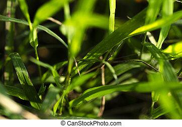 verde, superficial, pasto o césped, grew, día, profundidad, ...