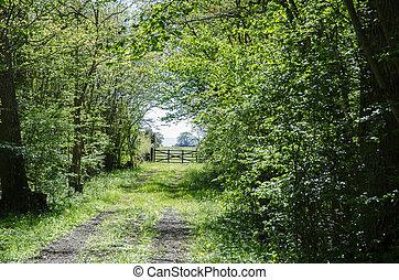 verde, túnel, de, fresco, folhas, em, um, estrada rural, com, um, antigas, madeira, gate., de, a, sueco, ilha, oland.