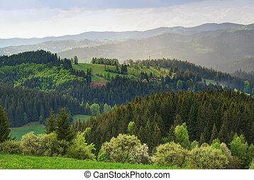 verde, tierras altas, colinas, campo, con, praderas, y,...