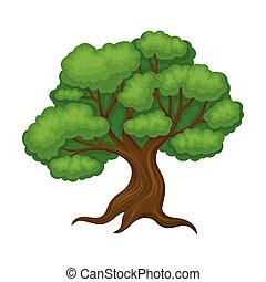 verde, tronco, árbol, roble, vector, ilustración, follaje, ...