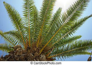 verde, tropicais, palma coco, árvores, em, a, azul, ensolarado, céu