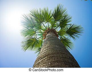 verde, tropicale, palma noce cocco, albero, in, il, blu, soleggiato, cielo