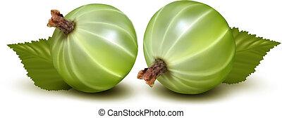 verde, uva spina, con, leaves., vettore