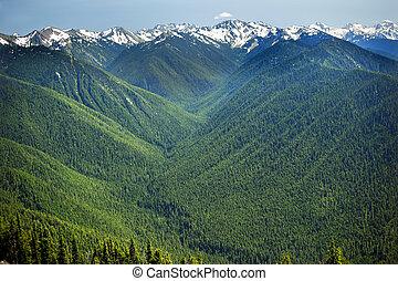 verde, valli, piante sempreverdi, neve, montagne,...