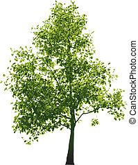 verde, vector, árbol