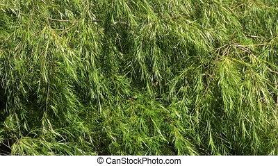 verde, vegetação