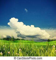 verde, verão, prado, sob, a, céus azuis, e, nuvens brancas