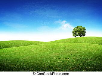 verde, verano, paisaje