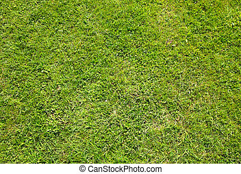 verde, verano, pasto o césped, textura, cicatrizarse, fondo.