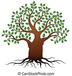 verde, vettore, albero, radici