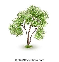 verde, vettore, albero, realistico