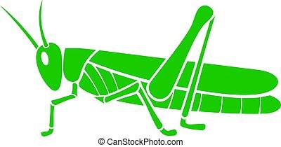 verde, vettore, cavalletta, illustrazione