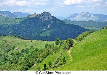 verde, vibrante, hermoso, montañas