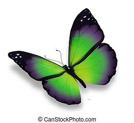 verde, violeta, mariposa, aislado, blanco