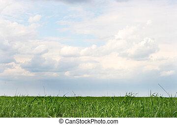 verde, wheaten, campo, y, cielo nublado