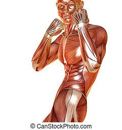 verdedeging, render, pose, gespierd, anatomie, mannelijke , 3d