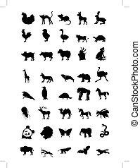 verden, i, dyr