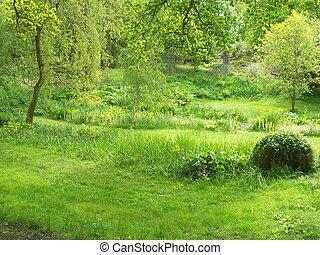 verdor, jardín