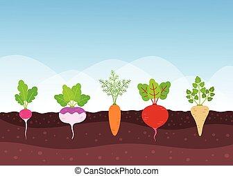 verdura, crescente, root-crops, giardino