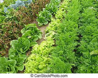 verdura, file, giardino
