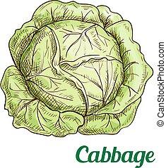 verdura, fresco, cavolo, isolato, schizzo