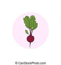 verdura, radice barbabietola, icona