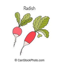 verdura, ravanelli, collezione, foglie