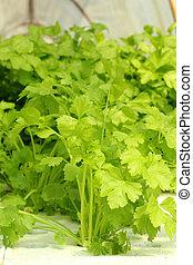 verdura verde, en, hydroponic, granja