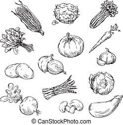verdura, vettore, vario, rivestire disegno
