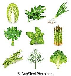 verduras verdes, y, especias, iconos, vector, conjunto