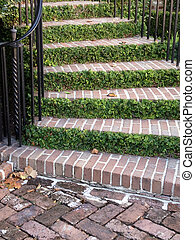 verdure, escalier