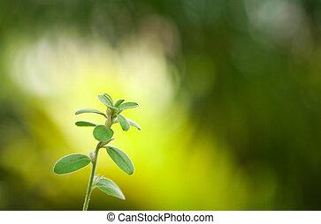 verdure, feuille, nature, brouillé, closeup, fond, vert, vue