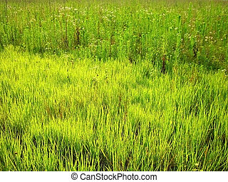 verdure; texture; background; nature; beauty