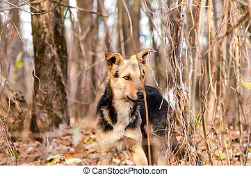 verdwaald, dwaal hond af, in, de, herfst bos