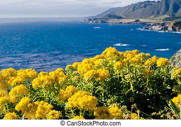 vergezicht, landschap, route, 1, staat, californië