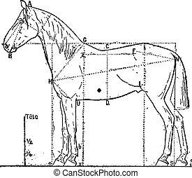 verhältnisse, pferd, engraving., weinlese