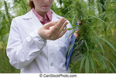 verificar, doctor, cannabis, flores