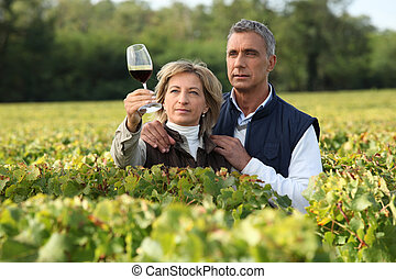 verificar, vinhedo, par, vinho