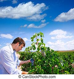 verificar, winemaker, tempranillo, oenologist, uvas, vino