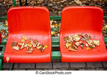 vermelho, assentos, esportes, stands., plataformas, folhas, fall., amarela, mentira, vazio