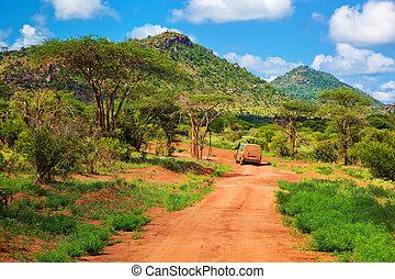 vermelho, chão, estrada, bush, com, savanna., tsavo, oeste,...