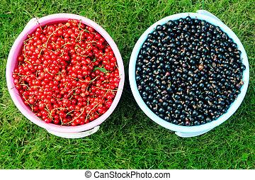 vermelho, e, pretas, groselhas