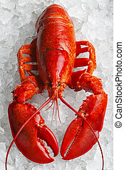 vermelho, inteiro, lagosta