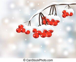 vermelho, inverno, fundo, bagas